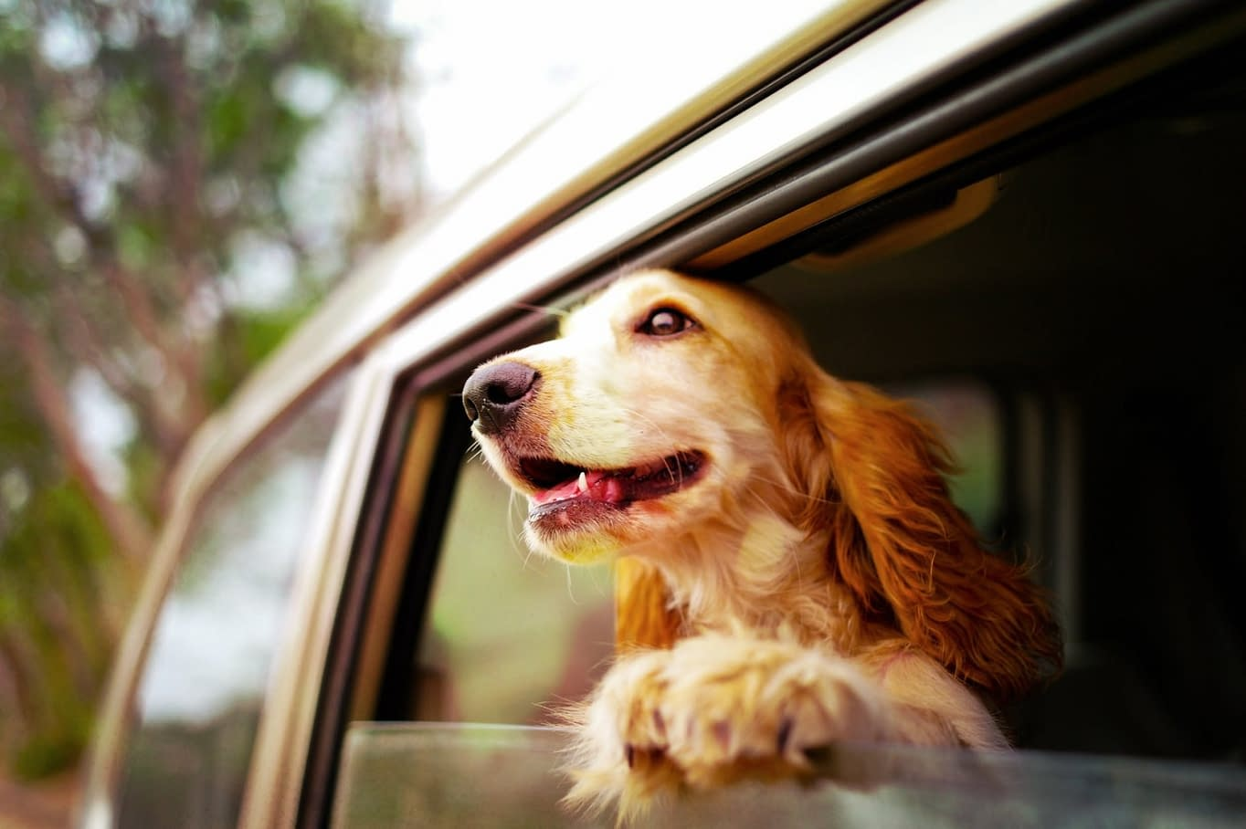 hond in auto 1